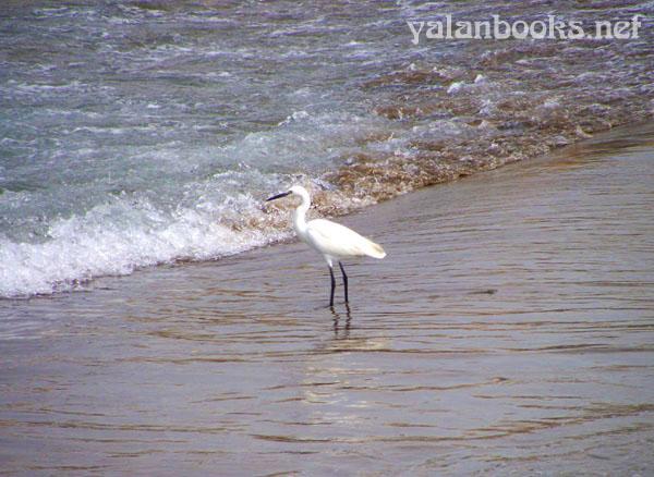 Taipei Travel Romanticism Sanzhi Seaside Photography 台北 旅行 三芝浅水湾 风光摄影  浪漫主义 Yalan雅岚 黑摄会